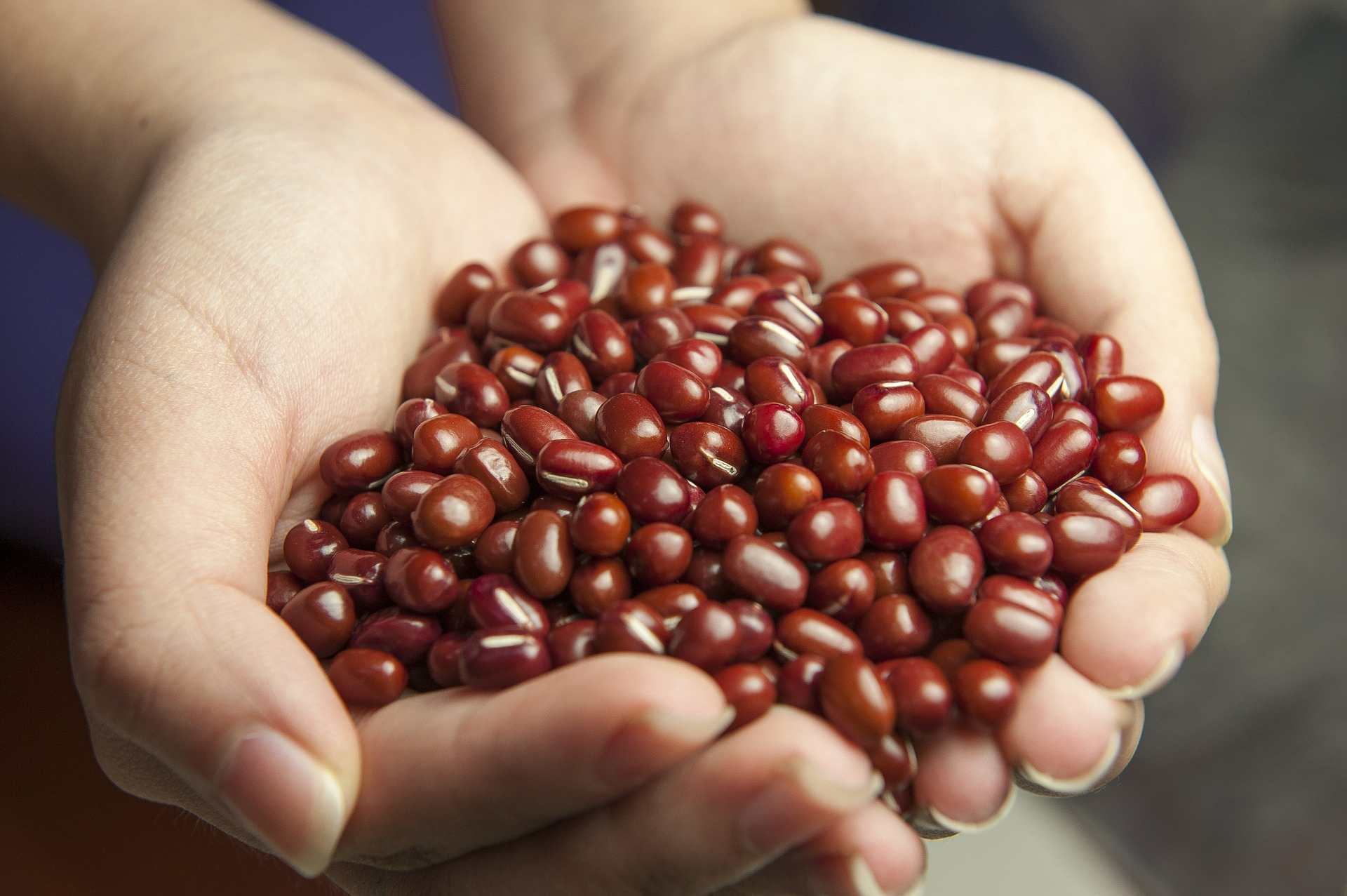 red-beans-587592_1920